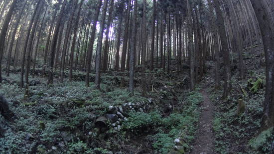kanatake (2).JPG