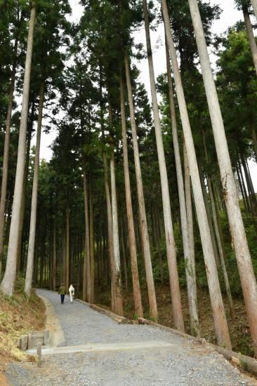daibutsu (1).JPG